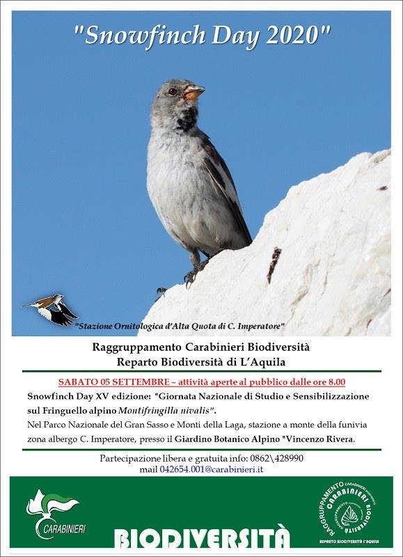 SNOWFINCH DAY 2020 - CAMPO IMPERATORE (AQ)